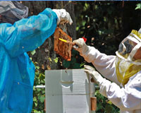 Troup County Association of Beekeepers